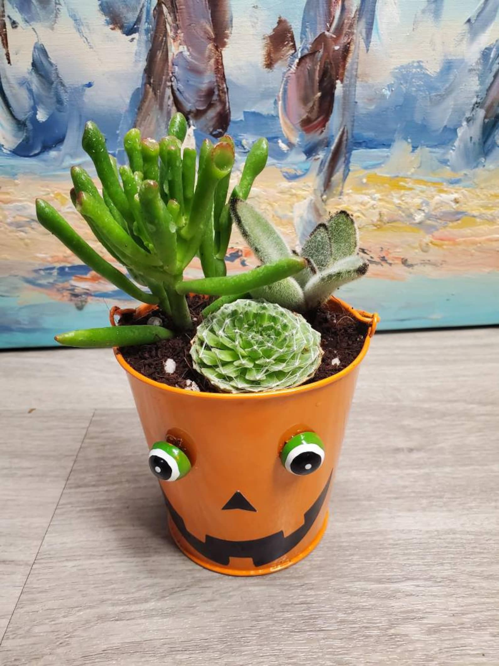 Mini Jack O Lantern Succulents