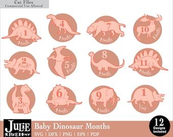 Baby Dinosaur Months