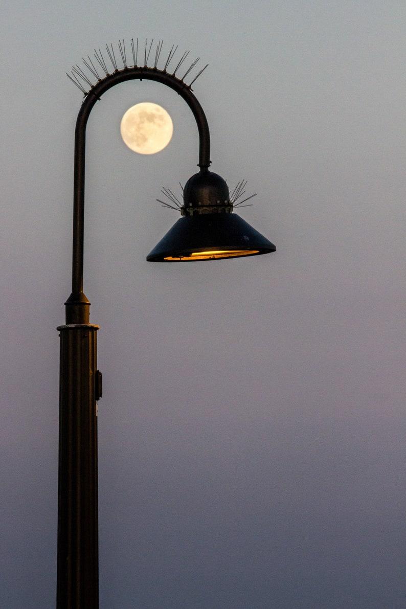 Lamp Lashes Framed Canvas image 1