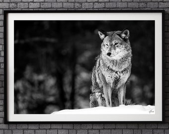 Unique Fine Art Photography | Wolf Painting | Wolf wall art | Wildlife Photography | Home decor hanging | Home wall art decor