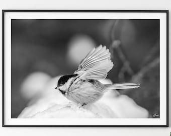 Unique Fine Art Photography - Wall Décor - Black Capped Chickadee - Bird Painting -Wildlife - Animal Digital Print - Home Décor - Wall Art