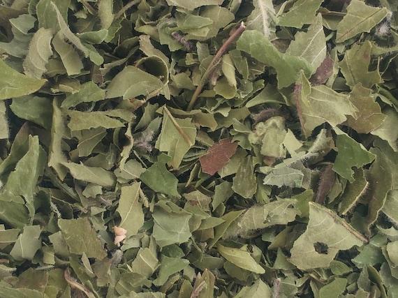 Bergamote/monarde (Monarda fistulosa)