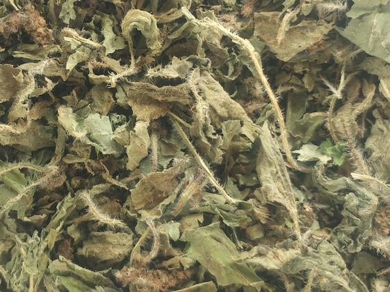 Tulsi/basilic sacré (Occimum tenuiflorum)