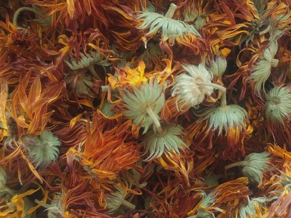 Calendule (Calendula officinalis)