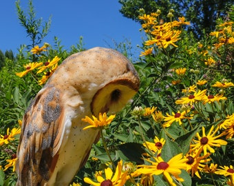 """Barn Owl - """"Reaper in the prairie"""""""