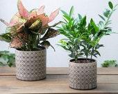Set of 2 - Brown Diamond Pattern Ceramic Planter Pots Planters Plants Basket Vase Indoor Outdoor Garden Boho Bohemian Gray 6.5 5.5 inches