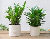 Set of 2 - White Tan Diamond Pattern Ceramic Planter Pots Planters Plants Basket Vase Indoor Outdoor Garden Boho Bohemian 6.5 5.5 inches