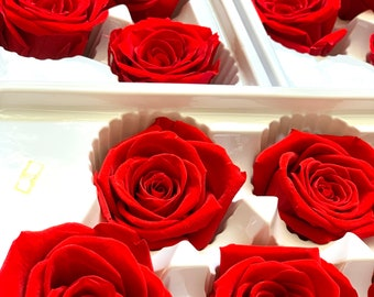 6 Preserved roses, Forever roses, Real roses last for 3 years, beauty and the beast roses, gift for her, preserved flower