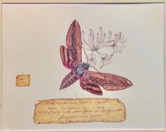 Privet Hawk-moth.(Sphinx ligustri) Unique & detailed limited edition print