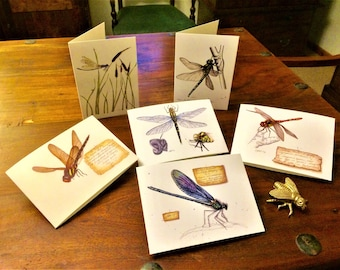 Dragonfly and Damselfly Greetings cards. All unique and accurate images painted by me.
