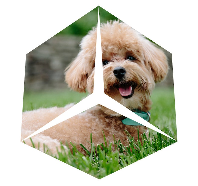 puppies: DIY paper-crystal cut-out-sheet image 0