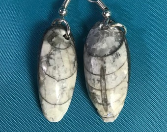 1 14 Pear Moroccan Orthoceras Fossil 925 Sterling Silver Earrings