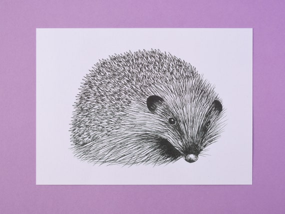 Large Hedgehog Art Print, black and white – Mammal Art Print – Nature Art Print – Unframed A5 size