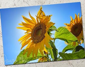 Sunflower photo greeting card