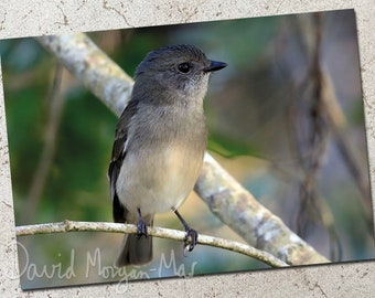 Jacky Winter photo greeting card