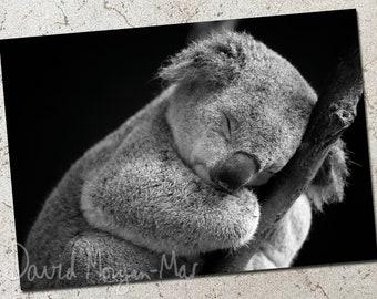 Koala photo greeting card: Five More Minutes