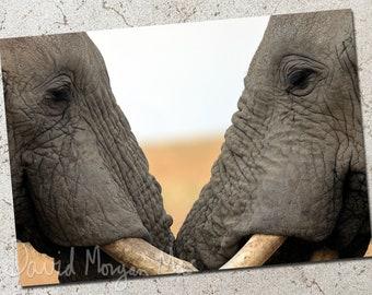 Elephant Brothers photo greeting card