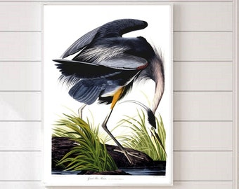 Great Blue Heron, Heron Bird, Audubon prints , Audubon posters, Audubon birds, Heron Art Printable, Vintage Bird Print, Altered Art