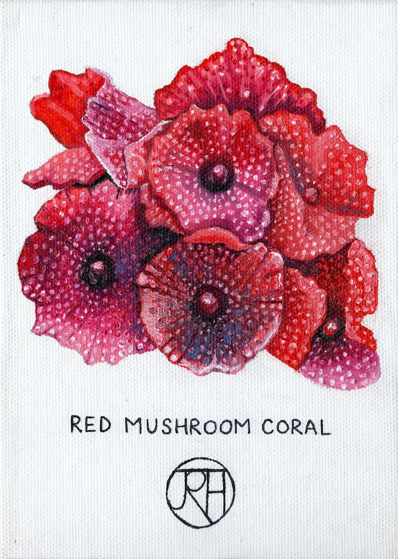 Mounted Print A4 Red Mushroom Coral