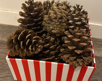 Small Pine Cones - real pine cones - 2-3 inch - 10 count - crafting or decorating cones