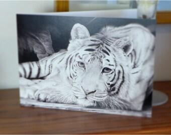 Tiger pencil gift card