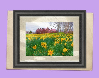 Printable Newport's Cliff Walk Unframed Print - Field of Daffodils at the Cliff Walk and Salve Regina University, Newport, Rhode Island