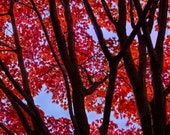 Fall Trees and Blue Sky Framed Wall Art Original Photography Landscape
