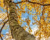 Michigan Fall Colors Tree Framed Wall Art Ready to Hang