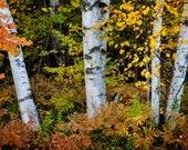 Birch Trees Landscape Art Framed Wall Art Fireplace Living Room Mantle