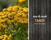 Tansy 100 Seeds Insect Repellant Non GMO Tanacetum vulgare
