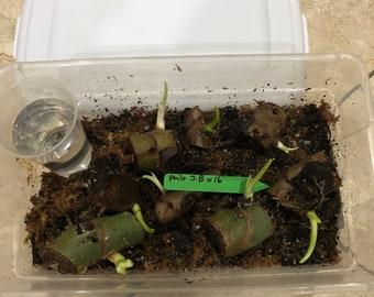 propagation starter kit