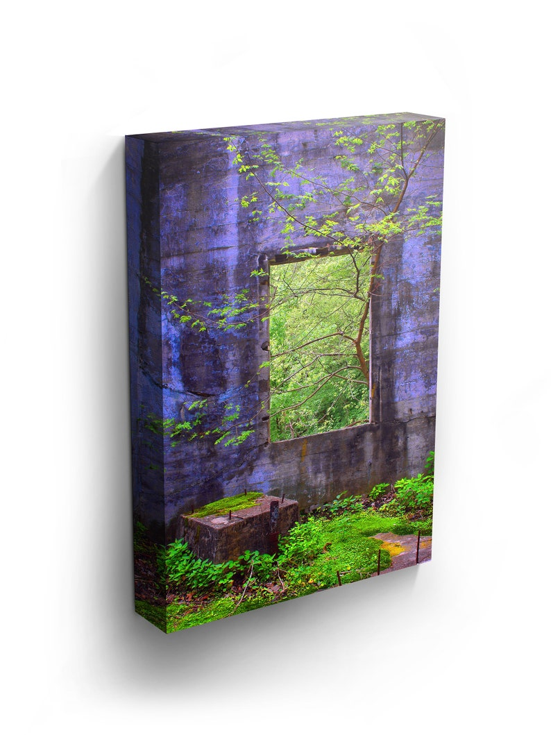 Mom Day Contemporary Style A Tree Growing Through The Window Of An Old Abandoned Electrical Power Mill In Minnesota Nature Landscape