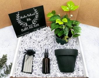GRAPE IVY PLANT Gift Box