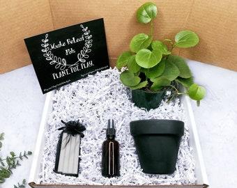 PERUVIAN GRAPE IVY Plant Gift Box
