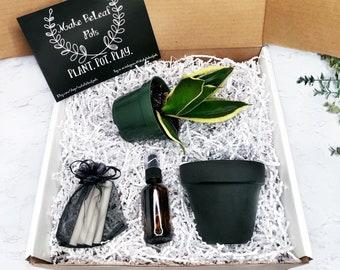 BIRD'S NEST PLANT Gift Box