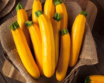 Golden Zucchini Summer Squash    Yellow Courgette - Heirloom, Open Pollinated, Untreated, Non GMO 8 seeds/pack