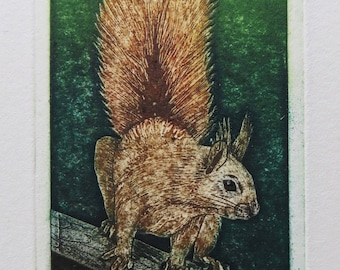 Red Squirrel, a limited edition collagraph print