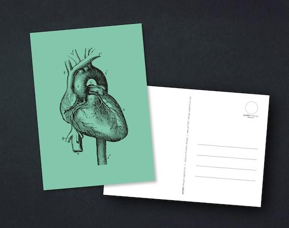 "Postcard - ""Human Heart"" Human Anatomical Vintage Heart, A6."