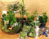 Moss Terrarium KIT Complete DIY set for plant lovers with stylish glass jar Forest in a Jar Ecosystem