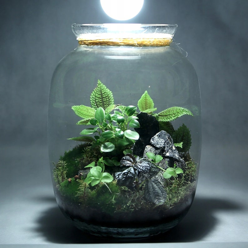 Moss Terrarium KIT  Complete DIY set for plant lovers with image 0
