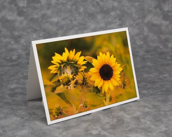 Sweet Light Sunflower/After Sunset Sweet Yellow Light/Blank Photo Greeting Card/Soft Matte Nice for Writing Notes