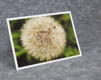 Dew on Dandelion Head/Monhegan Island/Make a Wish/Bumblebee Food/Blank Photo Greeting Card/Soft Matte Nice for Writing Notes