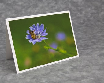 Bumblebee on Blue Chicory Flower/Roadside Flowers/Summer Flowers/Wildflowers/Blank Photo Greeting Card/Soft Matte Nice for Writing Notes