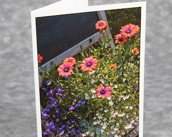 Chairflowers/Blue and White Lobelia in Pot with Orange African Daisy/Blank Photo Greeting Card/Soft Matte Excellent for Writing Notes