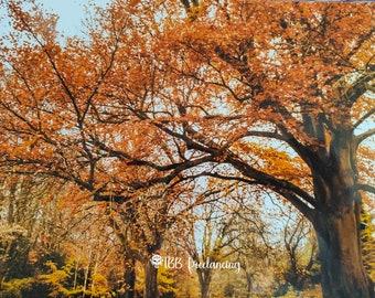 Autumn Colours. Fall leaves photo print