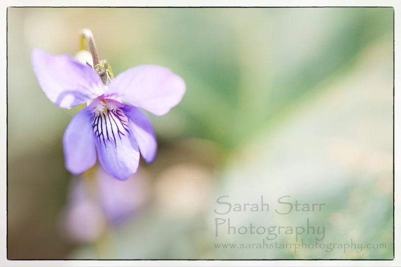 Blank Cards Peaceful Cards Flower Photography Nature Gift for Her Gifts for Her River Photography Original Nature Greeting Cards