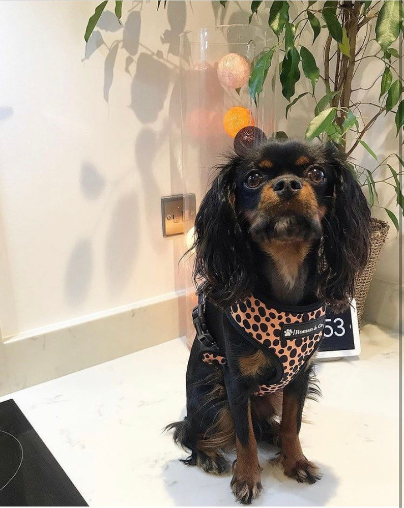 Reversible 2in1 Neoprone Adjustable Dog Harness Wild Thing Orange and Green Polka Dot