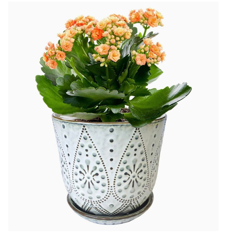 Office D\u00e9cor Pot Indoor-Outdoor Large Round Succulent Orchid Pot Gepege 6 Inch Beaded Ceramic Planter Hole And Saucer For Plants