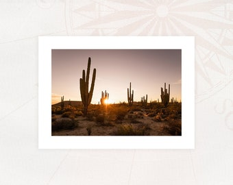 """""""CACTI"""" card Photography 13x18 cm with white borders Limited Edition"""