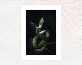 """""""VIPER"""" card Photography 13x18 cm with white borders Limited Edition"""
